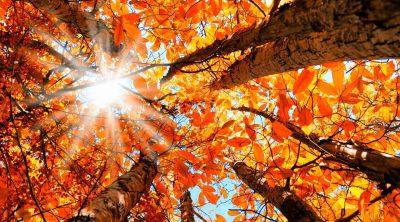 Autumnal Colour Favourites