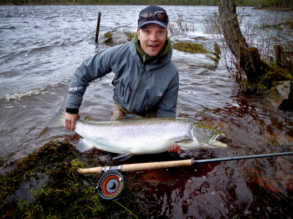 43.7lbs / 128cm Baltic Salmon landed in Kengis Bruk