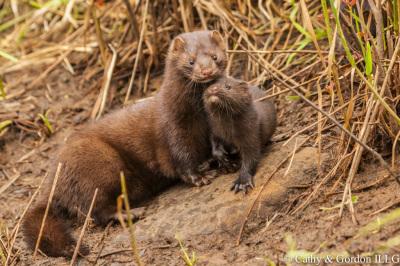 Minnesota wildlife connection animals photography photogrpahy photo foto fotografe art artistry art reference baby animal minnesota wildlife nature wild