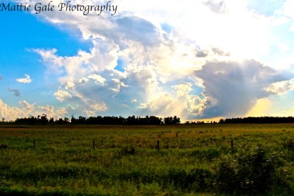 Sorge_Landscape4