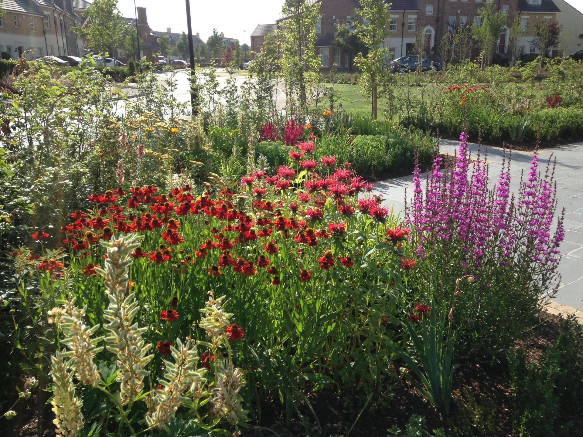 Ballantine Garden Village Lisburn, Herbaceous perennial planting