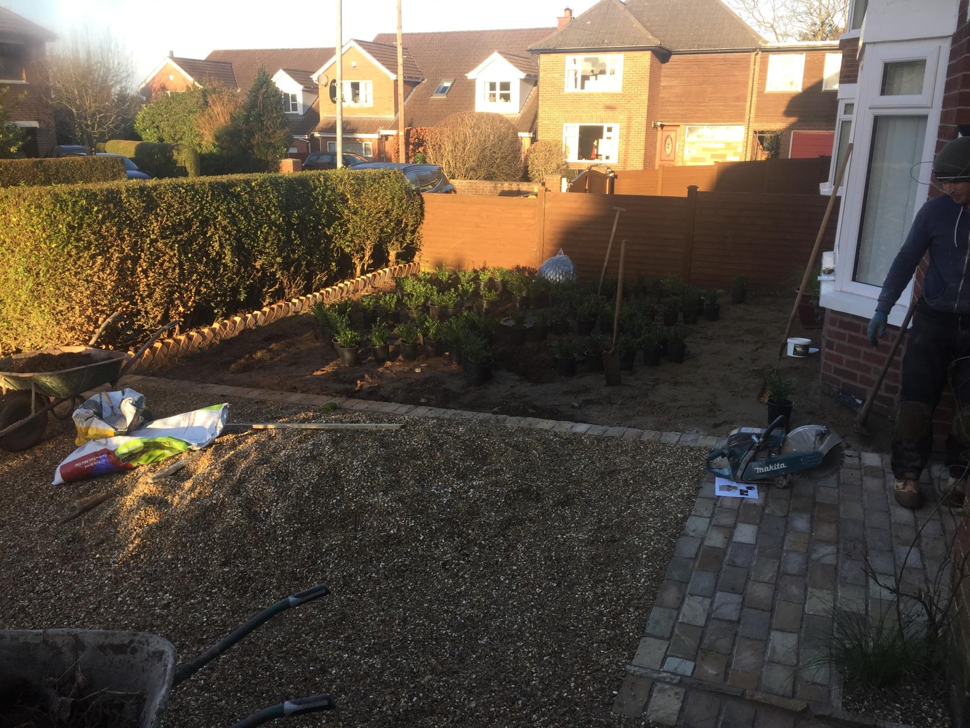 Ilex 'crenata' knot garden