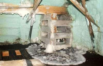 Un champignon dévastateur, de plus en plus répandu au Québec/A devastating fungus, more and more pre