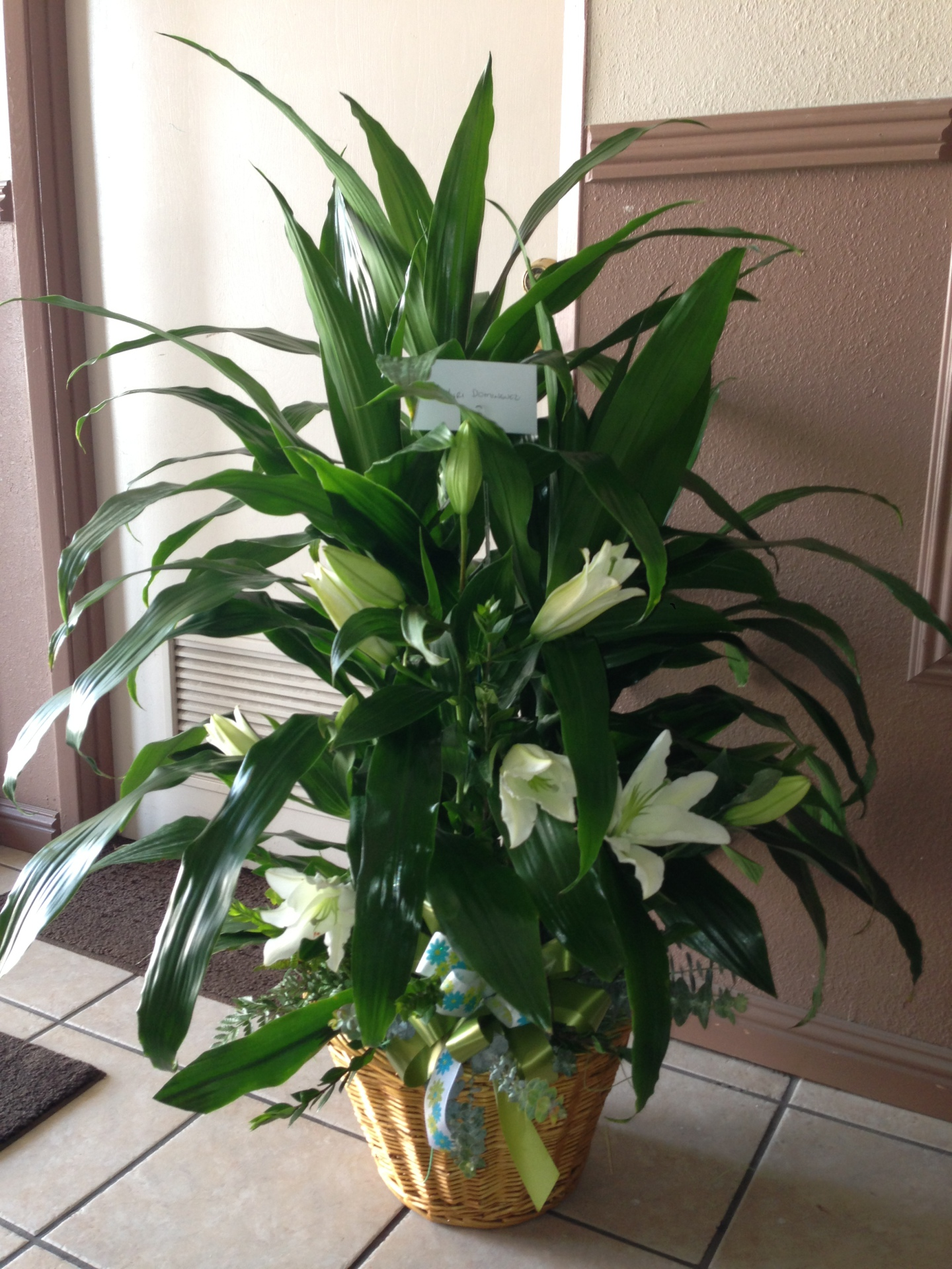 SP-4 Plant with lilies