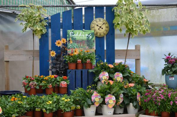 Garden Centre, Ben Vista, Plants,