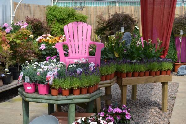 Garden Centre, Ben Vista, Plants