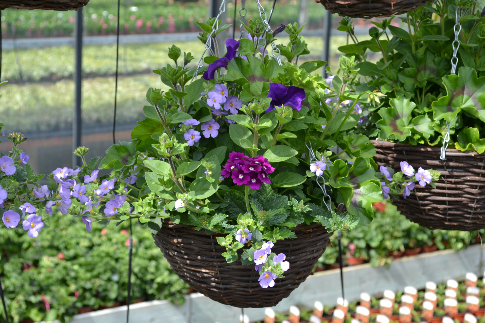 Garden Centre, Ben Vista, Plants, Hanging Basket