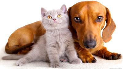 Pet Secure