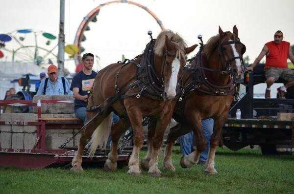 Draft Horse Pull Night