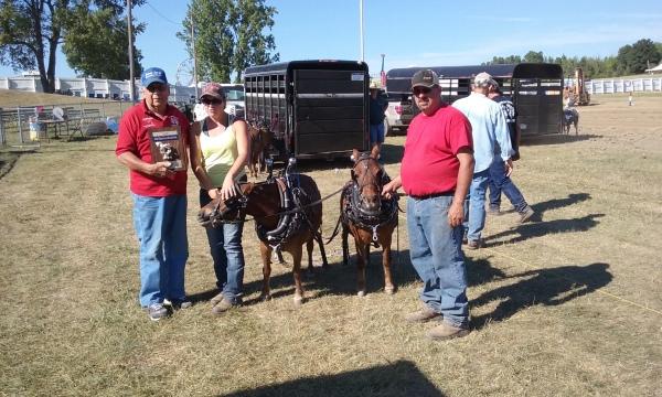 Mini Horse Pull 2016