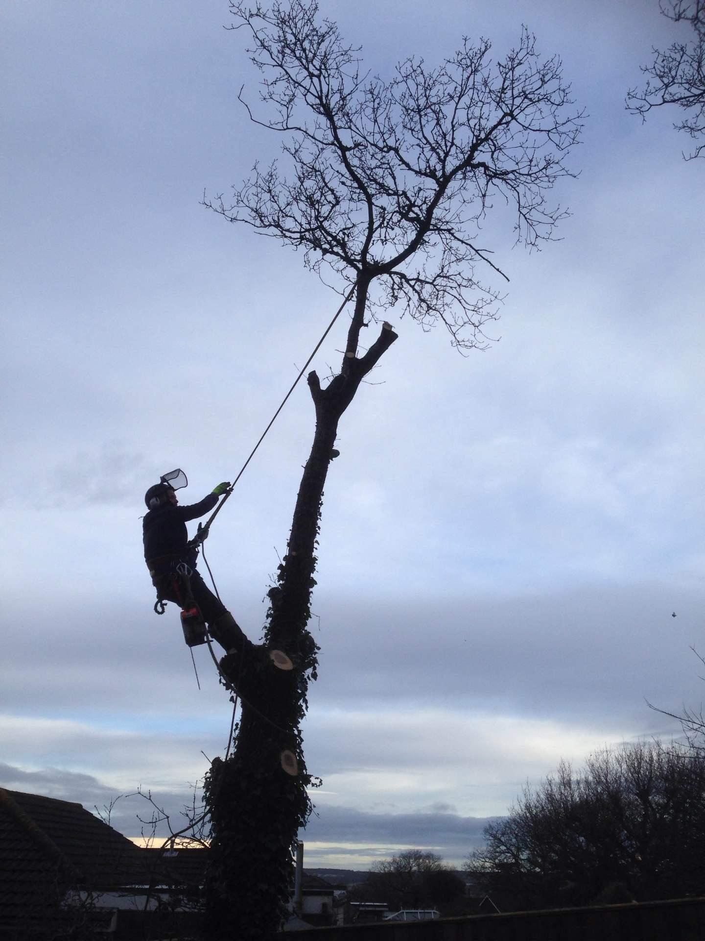 Isle of Wight Treework