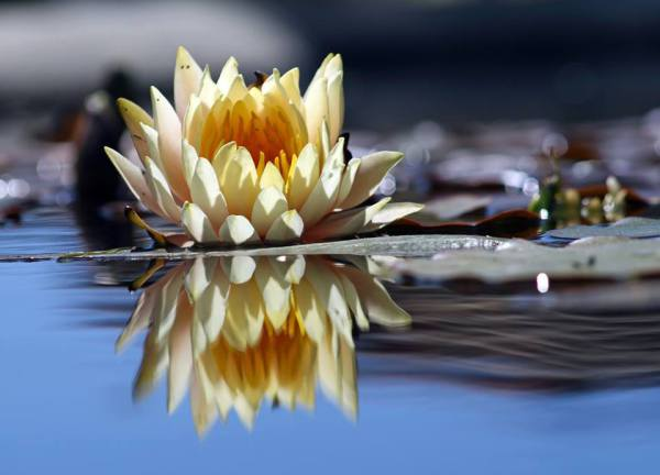 Yoga Class Near You: Christineyogatherapy