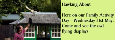 Family Activity Day with Hawking About Wednesday 31st May