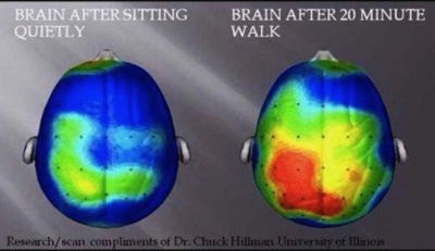 This is great, look what your brain is up to when you are active!