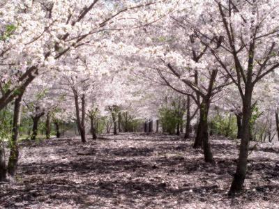 400px-SakuraHealed