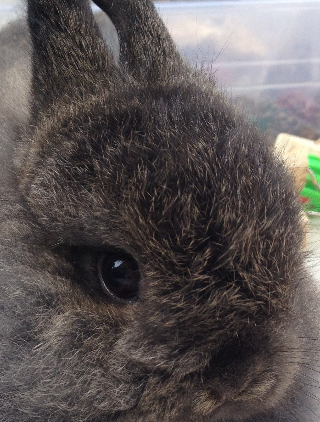 New Bunny