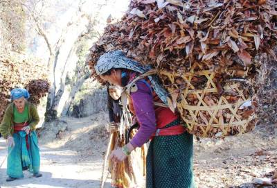 #513 - WOMAN IN MOUNTAIN COLLECTING DRY LEAVES