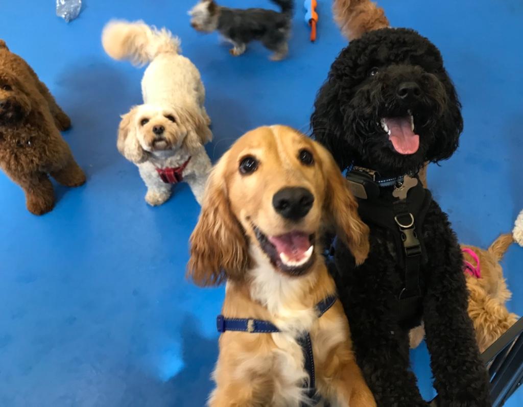 puppy training classes Kilwinning