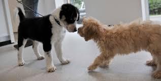 puppy training, puppy, training classes