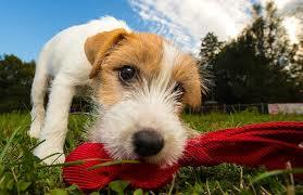 Dog Ownership 101 - Part 1 Thinking about getting a puppy...?