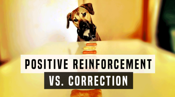 'Correction' - what does it mean for your dog?