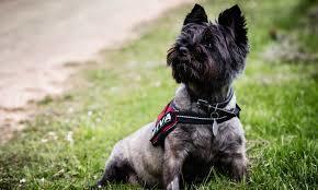 dog training, dog behaviour, Kilwinning, one to one training