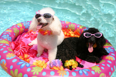 Top Tips For Taking Your Dog On Holiday