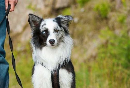 dog training Kilwinning