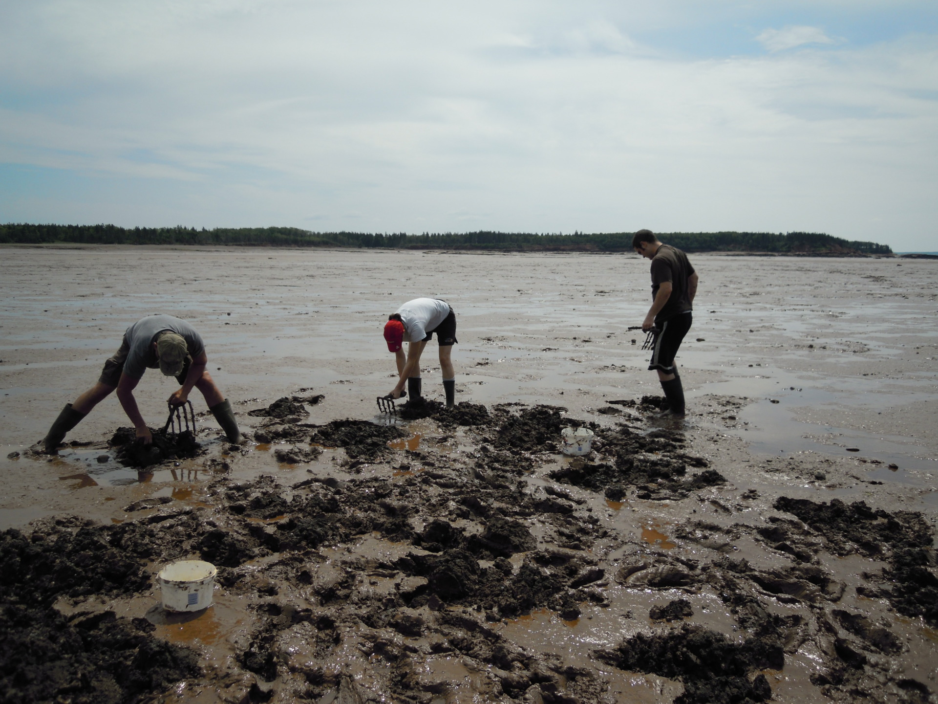 Clamming on the mud flats in the Minus Basin in the Bay of Fundy