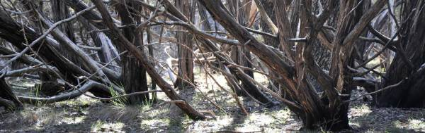 luis-ramirez-forest