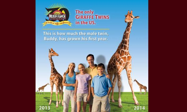 A photo backdrop celebrating the first year of the giraffe twins born at the Ranch