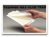 trapper glue board trap