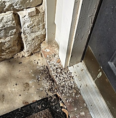 bird droppings poop
