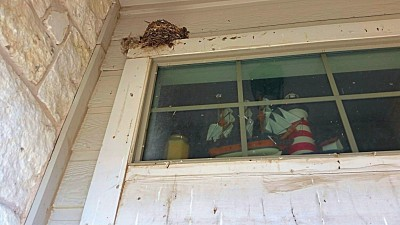 barn mud swallow nest
