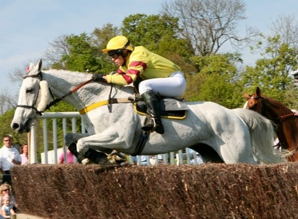 Gallant grey Carryonharry has passed away aged 24