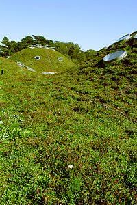 Large Project Green Roof