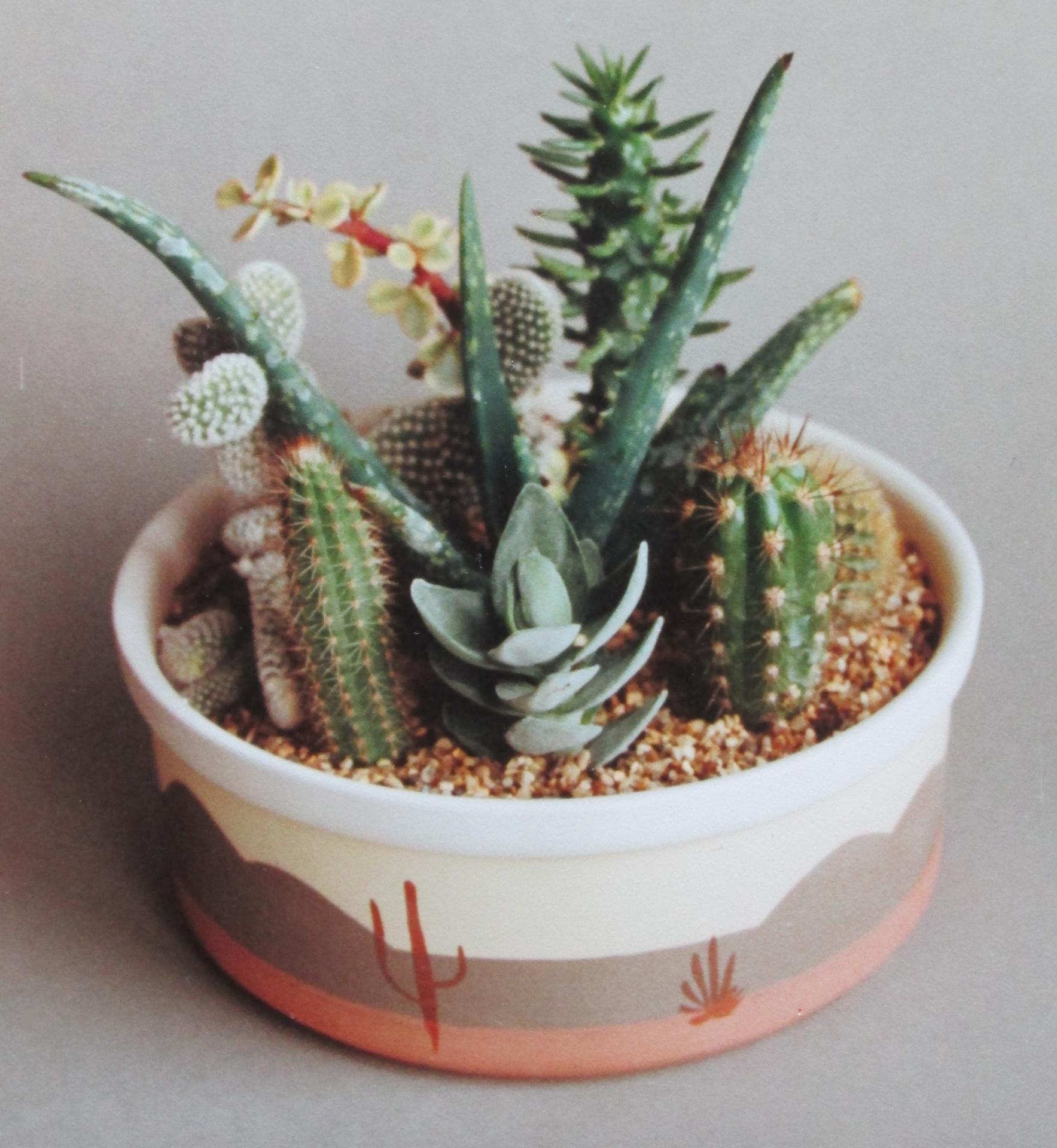 jigger jolly made cactus bowls