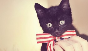 kitten-wearing-bowtie-770x450_article