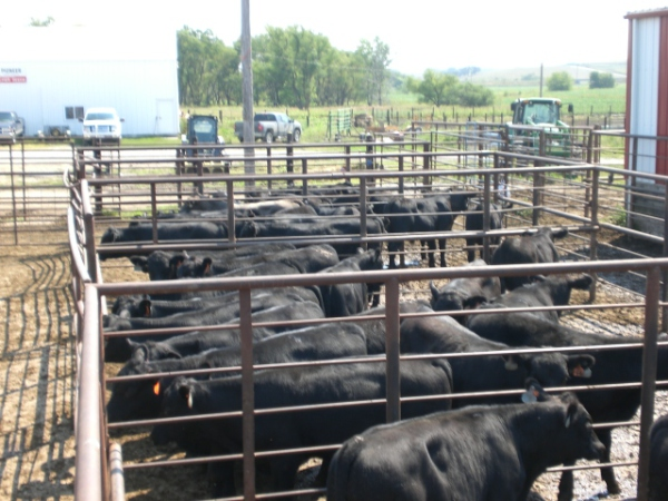 Sale Barn 2