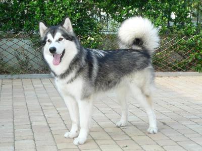 Liam's dog Molly