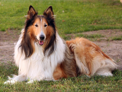 Cassandra's dog Alfie