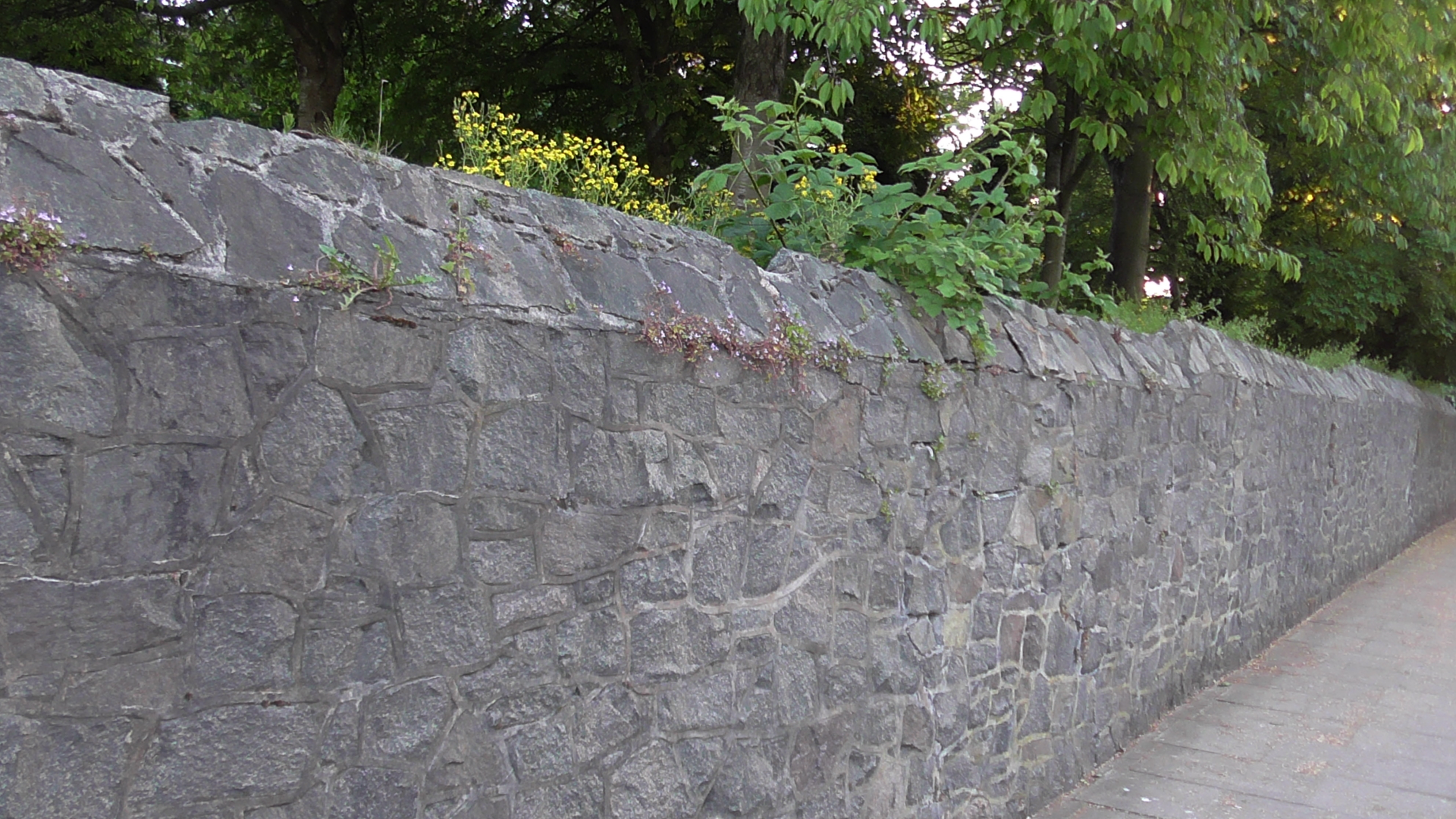 Party Fence Wall