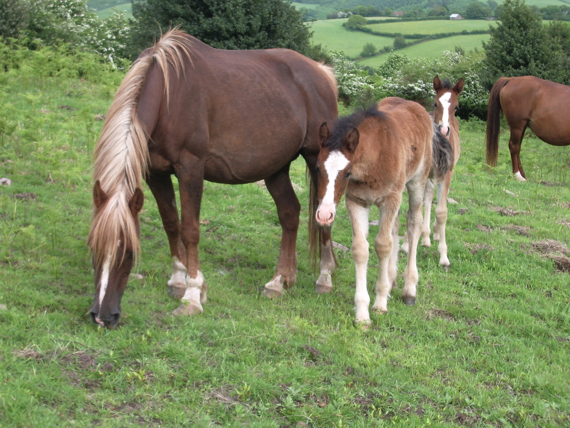 Foals are born May & June