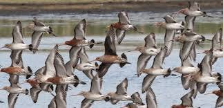 See wading birds