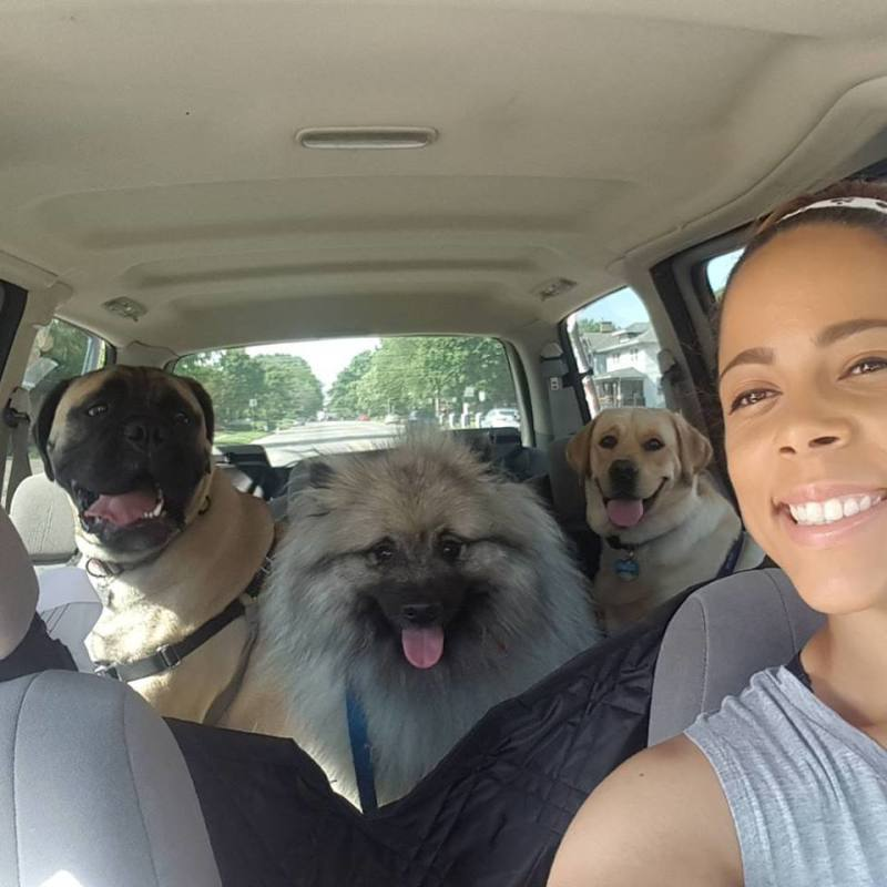 Traveling With Pups