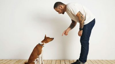 5 Skills Every Dog Should Know