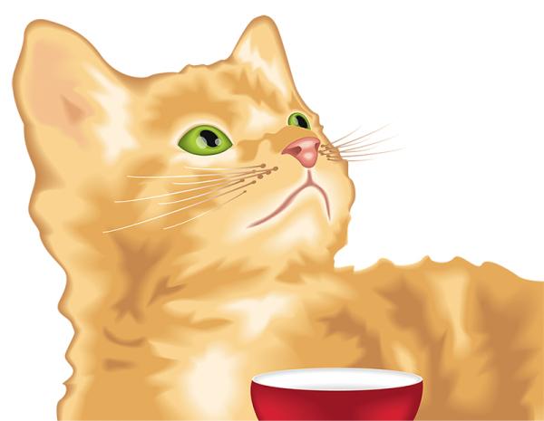 pisica-info