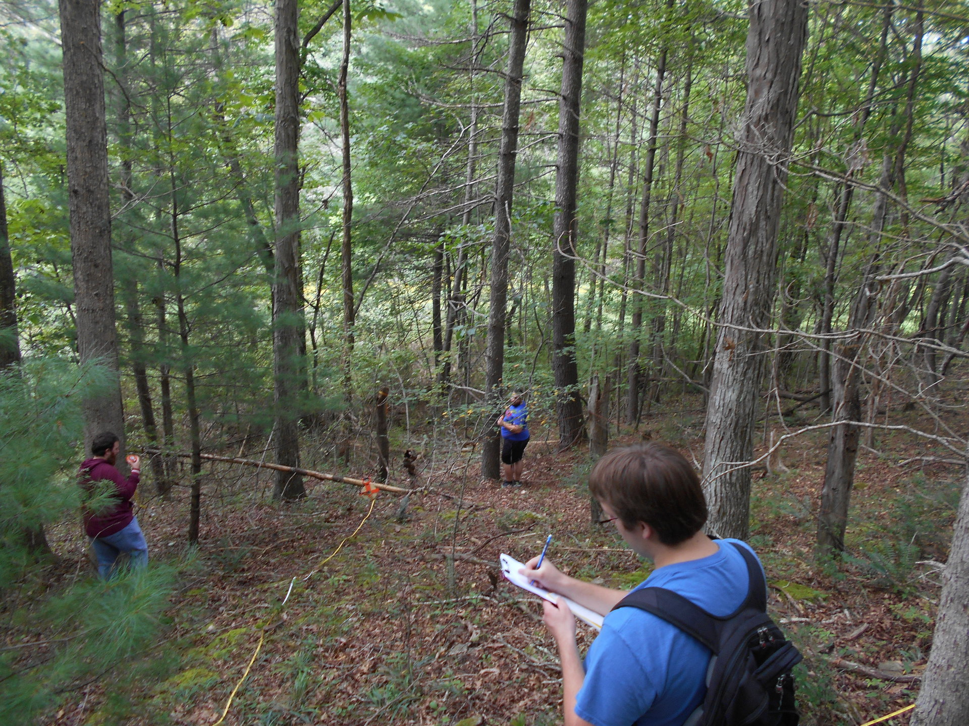 Forest data collection on Concord grounds