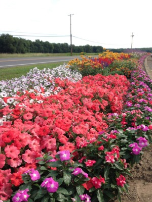 Wallkill View Farm's Flower Bed: How our $1 pots can create a stunning display in your garden