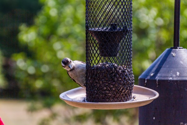 Birds abound here in both natural and specialized house settings.